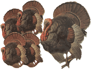 Turkey Hot Pad & Coasters