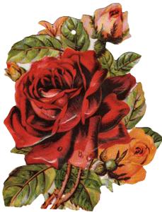 Red Rose Tag